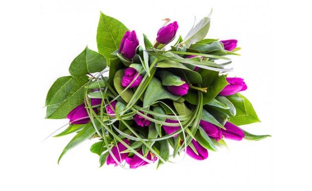 fioletowe-tulipany