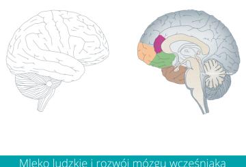 rozwój mózgu wczesniaków